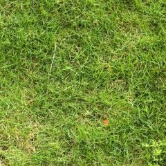 25 Free High-Resolution Grass Textures
