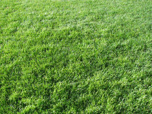 Grass Textures 22 Free Images To Download