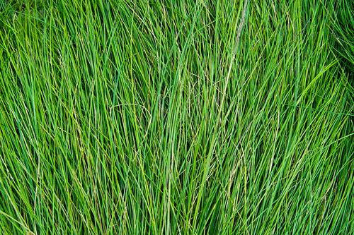 Tall Grass Texture Alpha | www.pixshark.com - Images ...
