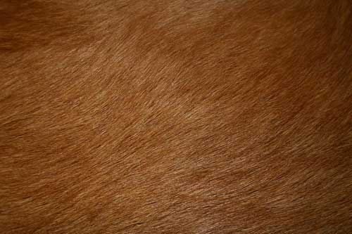 Fur Textures 175 Free High Res Animal Skins