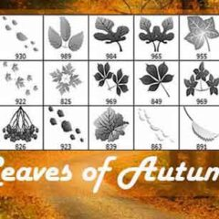 20 Leaf Clip Art Brushes for Fall-Themed Designs