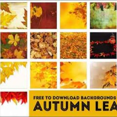 22 Leaf  Backgrounds for Your Fall Projects