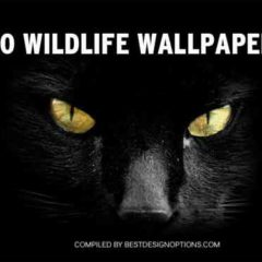 40 High-Definition Wildlife Wallpapers for Your Desktop