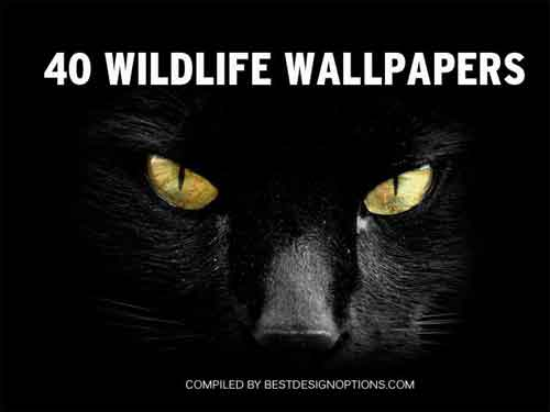 wildlife wallpapers