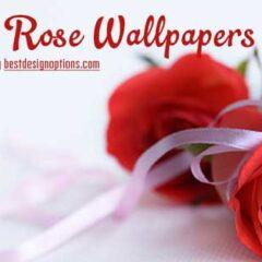 30 Beautiful Rose Wallpapers for Your Desktop