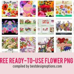 1K+ Free Transparent Flower PNG Files for Spring