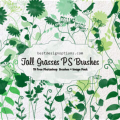 15 Tall Grass Clip Art PNG and Photoshop Brushes
