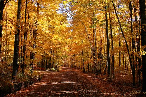 Autumn Desktop Wallpaper 21 Scenic Pictures Of Fall