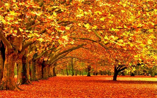 Autumn Desktop Wallpaper 21 Scenic Pictures Of Fall