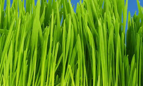 Adding Realistic Grass to Renders - Dylan Brown Designs