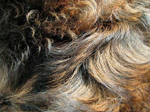 Cheetah Fur Close Up Fur Textures: 175 Free...