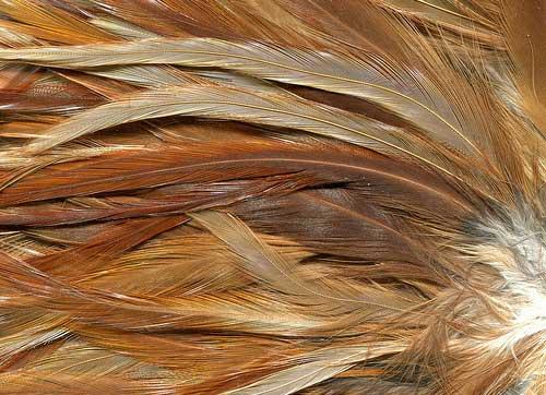 fur textures 175 free highres animal skins