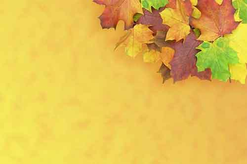 Leaf Background 22 Free Textures For Fall Design Projects