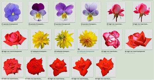 Flower Png Files 1k Free Transparent Flower Images