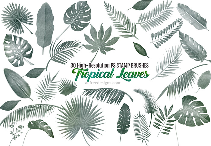 Tropical Leaves Brushes 30 Varieties For Summer Designs 30 photo file 4256 x 2832 px resolution 300 dpi. tropical leaves brushes 30 varieties