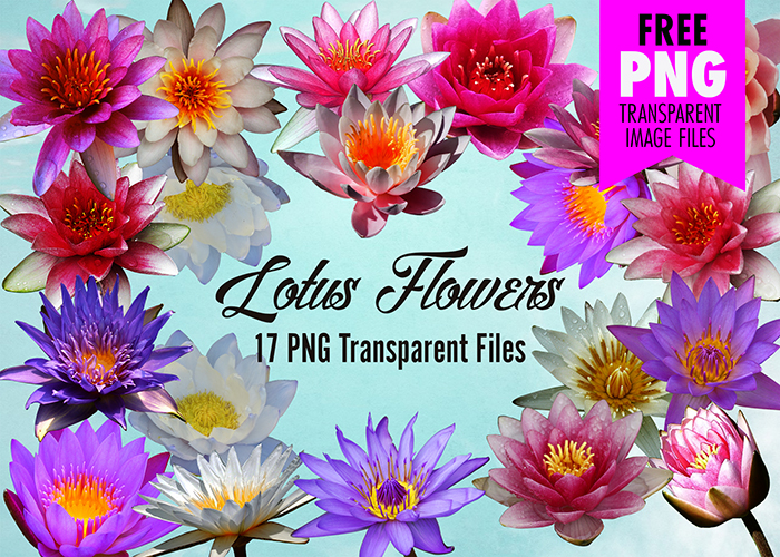 Lotus Flower Clip Art 17 Transparent Png Images To Download Free