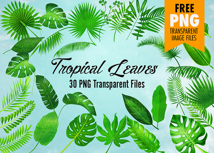 Tropical Leaves Clip Art 30 Watercolor Textured Transparent Images Summer tropical background flamingo bird with palm and banana leaves monstera and datura flowers. tropical leaves clip art 30 watercolor